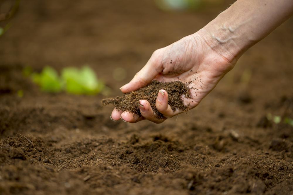 Ammendate organico per i suoli agricoli, utilizzare la sansa di olive